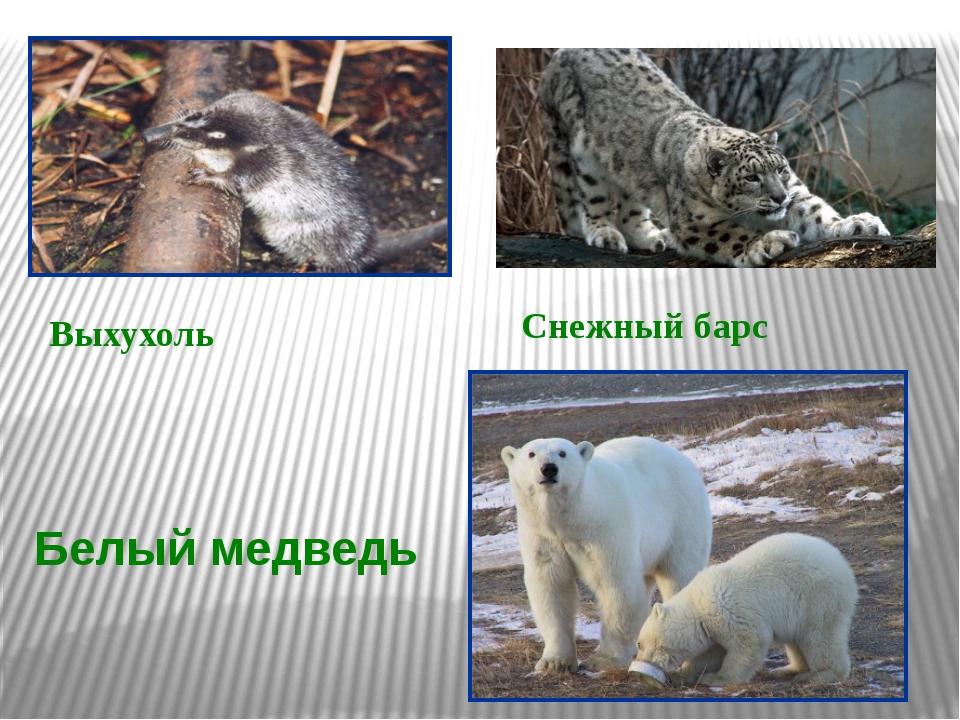 Выхухоль Белый медведь Снежный барс