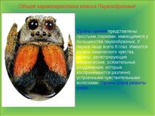 Общая характеристика класса Паукообразные Органы зрения представлены простыми