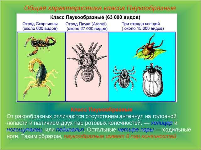 Общая характеристика класса Паукообразные Класс Паукообразные От ракообразных...