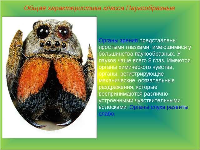 Общая характеристика класса Паукообразные Органы зрения представлены простыми...