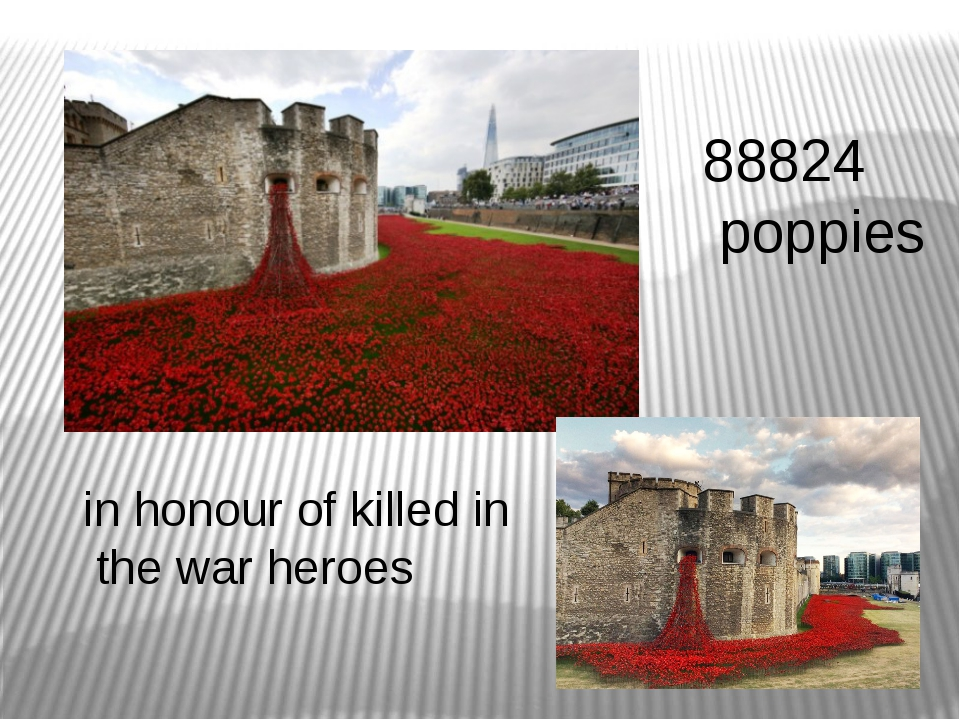88824 poppies in honour of killed in the war heroes