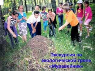 Экскурсия по экологической тропе «Муравейник»