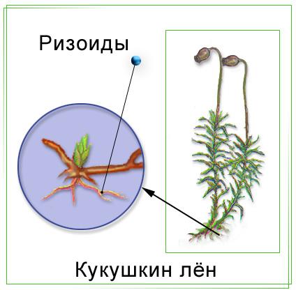 Биология для ученика и учителя - КУКУШКИН ЛЕН