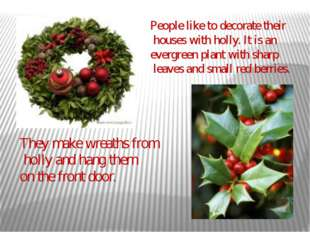 People like to decorate their houses with holly. It is an evergreen plant wit