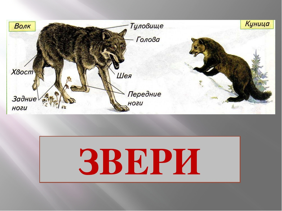 презентации 2 класс окружающий мир школа россии