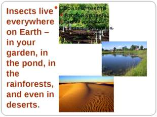 Insects live everywhere on Earth – in your garden, in the pond, in the rainfo
