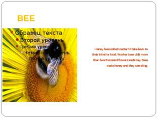 BEE Honey bees collect nectar to take back to their hive for food. Worker bee