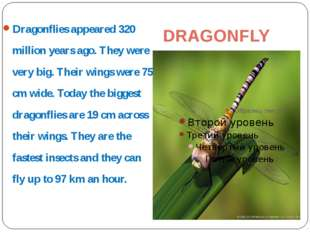 DRAGONFLY Dragonflies appeared 320 million years ago. They were very big. The