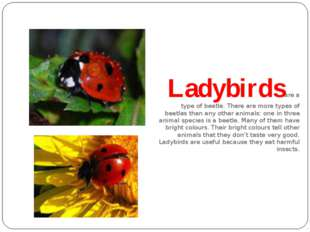 Ladybirds are a type of beetle. There are more types of beetles than any oth