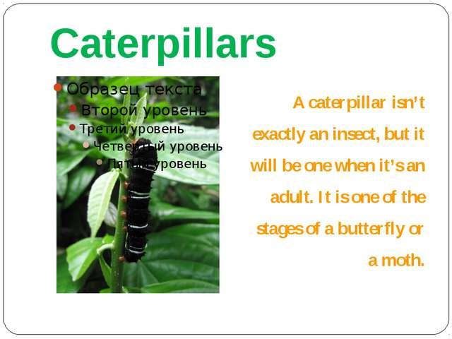 Caterpillars A caterpillar isn't exactly an insect, but it will be one when i...