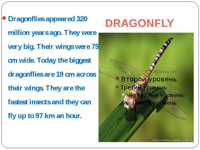 DRAGONFLY Dragonflies appeared 320 million years ago. They were very big. The...