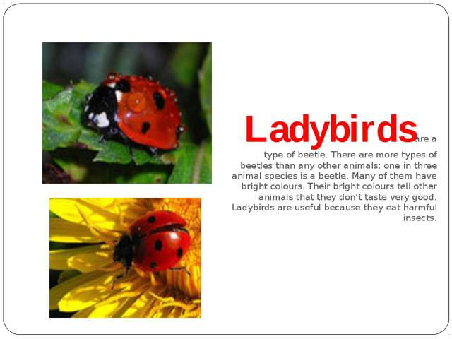 Ladybirds are a type of beetle. There are more types of beetles than any oth...