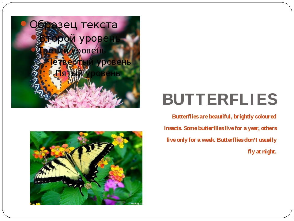 BUTTERFLIES Butterflies are beautiful, brightly coloured insects. Some butte...