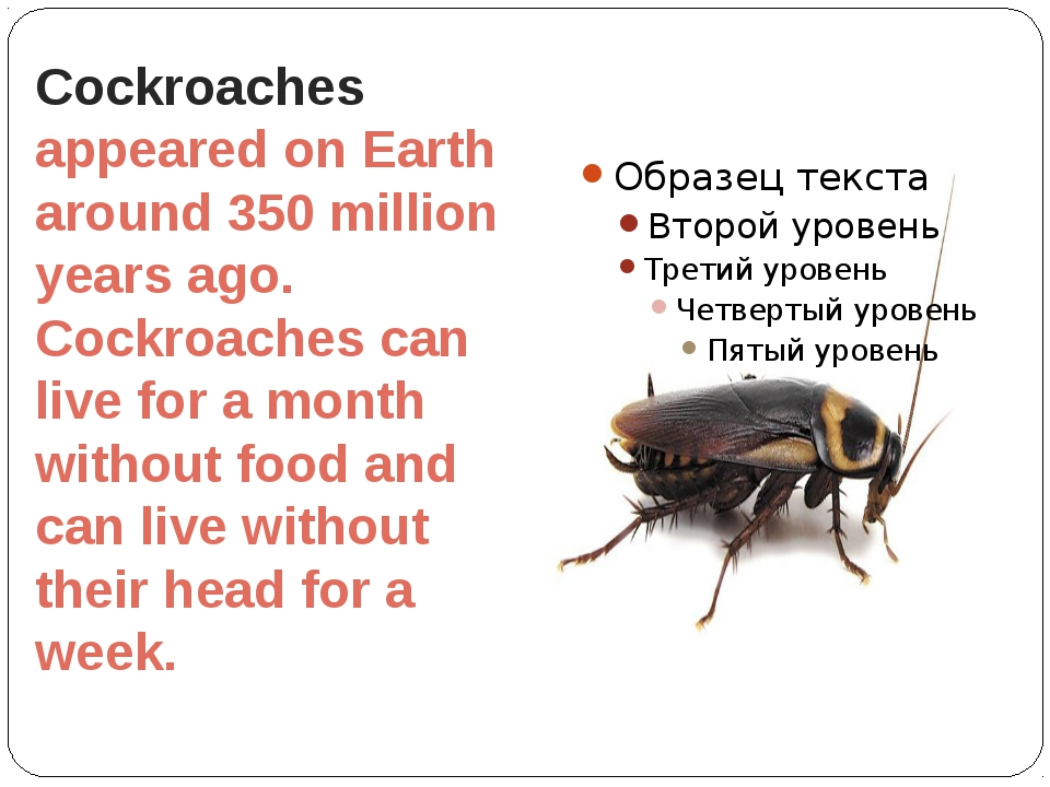 Cockroaches appeared on Earth around 350 million years ago. Cockroaches can l...