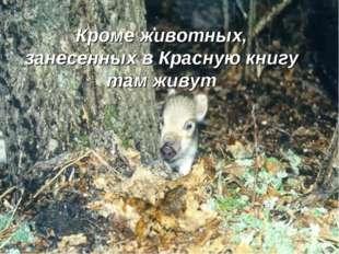 Кроме животных, занесенных в Красную книгу там живут