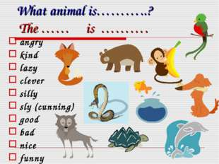 What animal is………..? The …… is ………. angry kind lazy clever silly sly (cunning