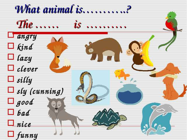 What animal is………..? The …… is ………. angry kind lazy clever silly sly (cunning...
