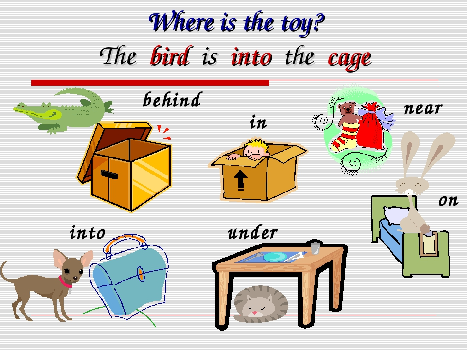 Where is the toy? The bird is into the cage near in behind into under on