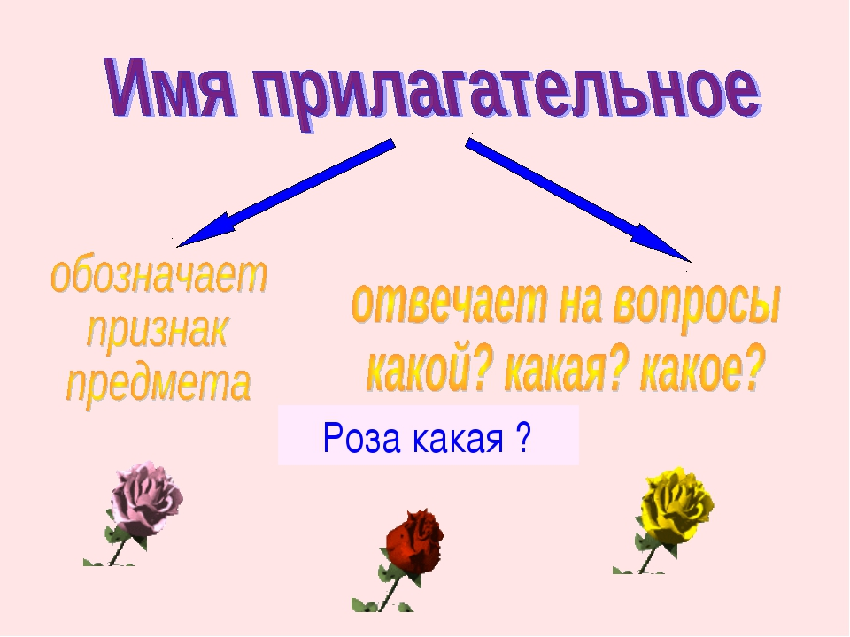 Роза какая ?