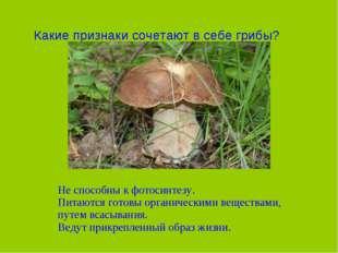 Какие признаки сочетают в себе грибы? Не способны к фотосинтезу. Питаются гот