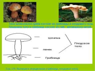 Тело шляпочного гриба состоит из грибницы и плодового тела. Плодовое тело и г