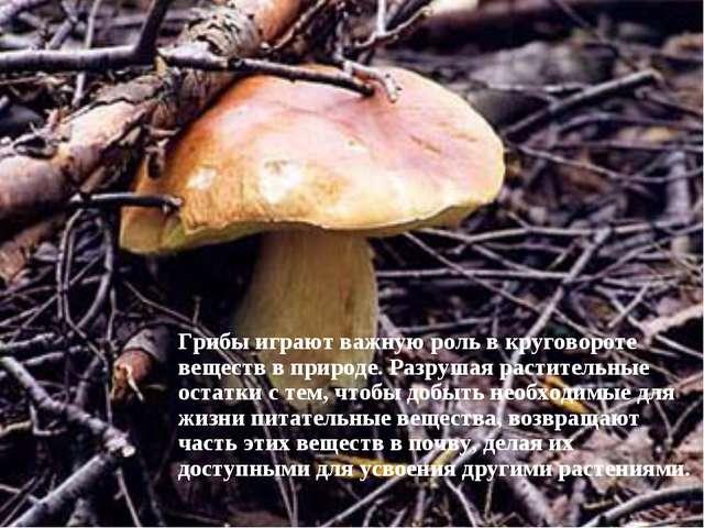 Грибы играют важную роль в круговороте веществ в природе. Разрушая растительн...