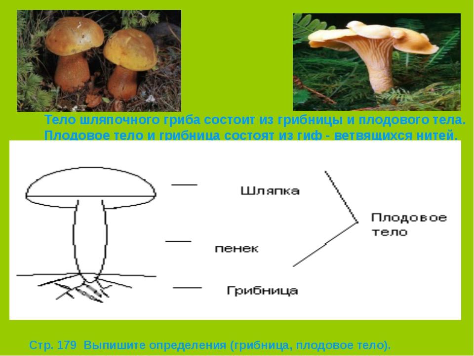 Тело шляпочного гриба состоит из грибницы и плодового тела. Плодовое тело и г...
