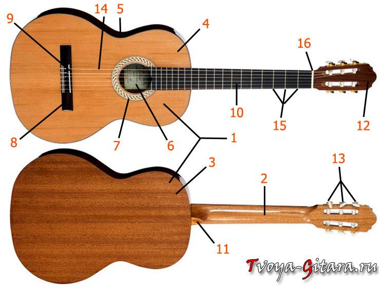 Устройство акустической гитары Tvoya-Gitara.ru - Твоя Гитара Блог для начинающих гитаристов