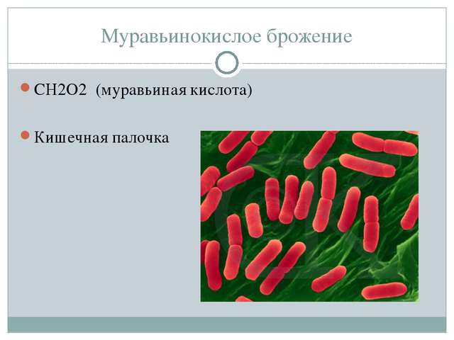 Муравьинокислое брожение СН2О2 (муравьиная кислота) Кишечная палочка