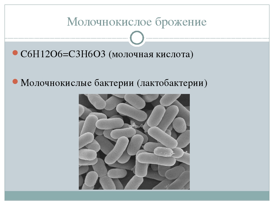 Молочнокислое брожение С6Н12О6=С3Н6О3 (молочная кислота) Молочнокислые бактер...