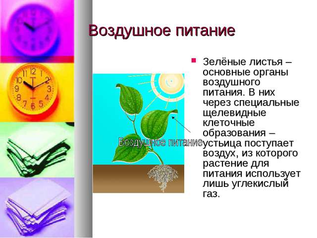 Воздушное питание Зелёные листья – основные органы воздушного питания. В них...