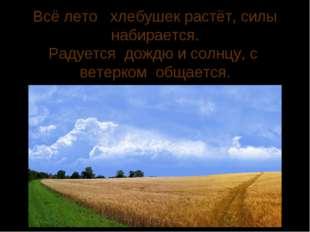 Всё лето хлебушек растёт, силы набирается. Радуется дождю и солнцу, с ветерко