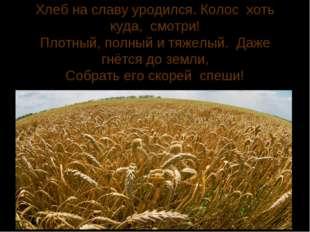 Хлеб на славу уродился. Колос хоть куда, смотри! Плотный, полный и тяжелый. Д