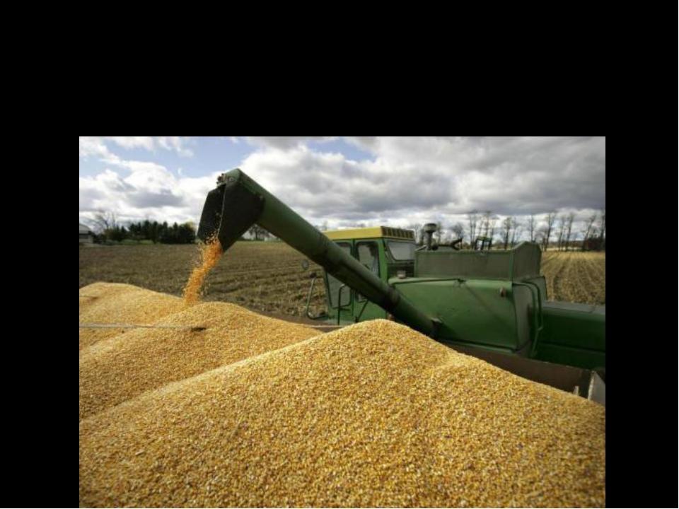 Осенью работы много агрономам, комбайнёрам, Механизаторам, шоферам.