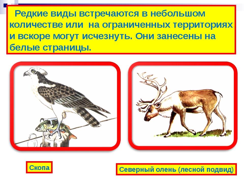 Редкие виды встречаются в небольшом количестве или на ограниченных территори...