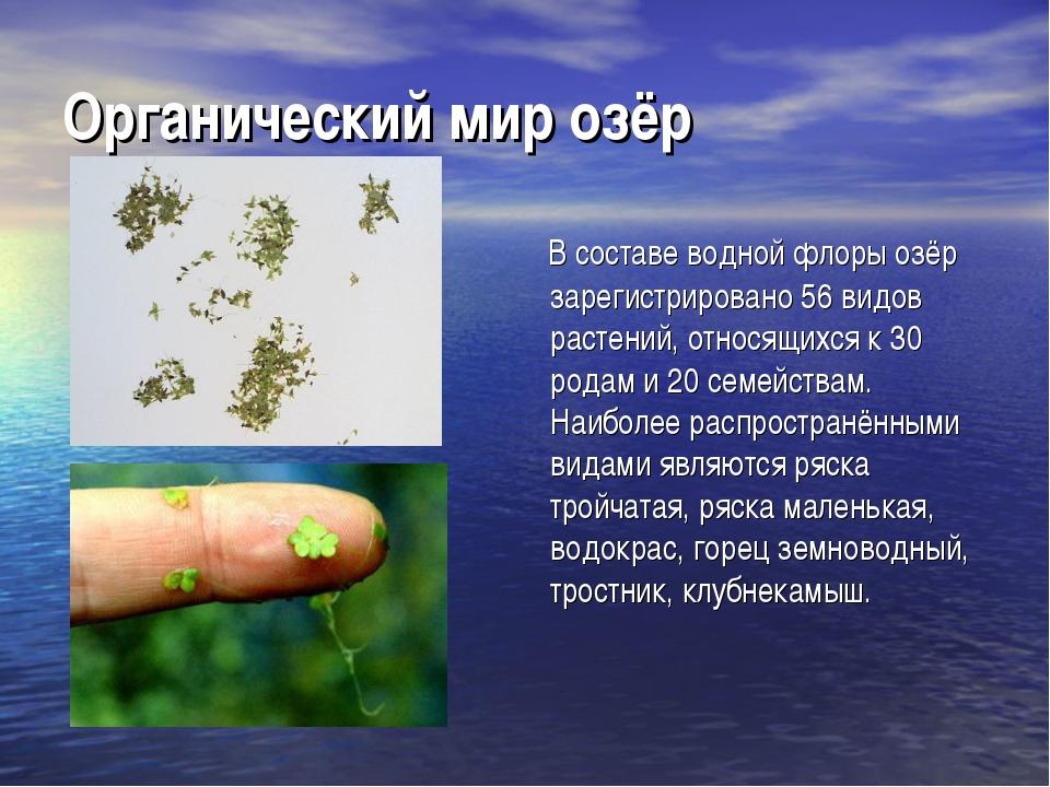 Органический мир озёр В составе водной флоры озёр зарегистрировано 56 видов р...
