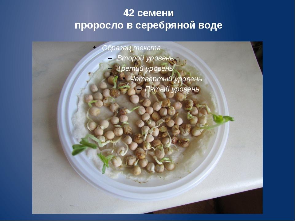 42 семени проросло в серебряной воде