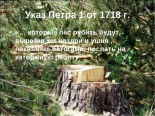 Указ Петра 1 от 1718 г. «… которые лес рубить будут, вырезав им ноздри и ушня