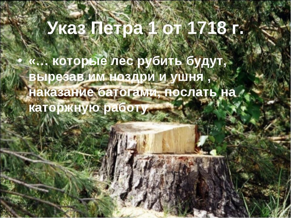 Указ Петра 1 от 1718 г. «… которые лес рубить будут, вырезав им ноздри и ушня...
