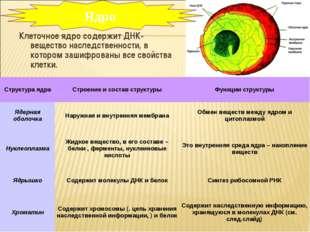 Клеточное ядро содержит ДНК- вещество наследственности, в котором зашифрованы