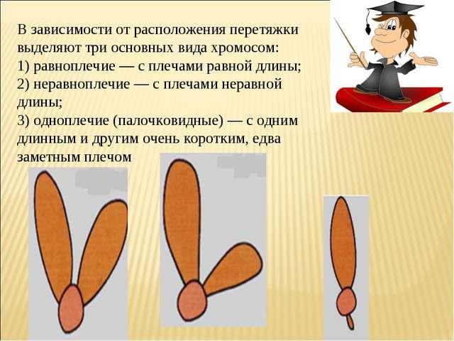 В зависимости от расположения перетяжки выделяют три основных вида хромосом:...