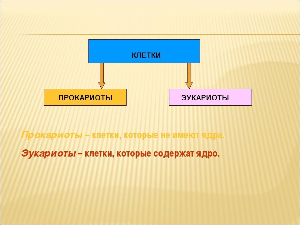 КЛЕТКИ ПРОКАРИОТЫ ЭУКАРИОТЫ Прокариоты – клетки, которые не имеют ядра. Эукар...
