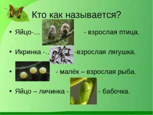 Кто как называется? Яйцо-… - взрослая птица. Икринка -… -взрослая лягушка. …