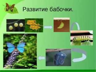 Развитие бабочки.