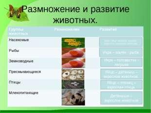 Размножение и развитие животных. Либо: яйцо- личинка- куколка-взрослое насеко