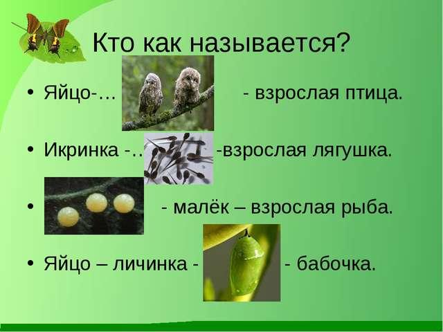 Кто как называется? Яйцо-… - взрослая птица. Икринка -… -взрослая лягушка. …...