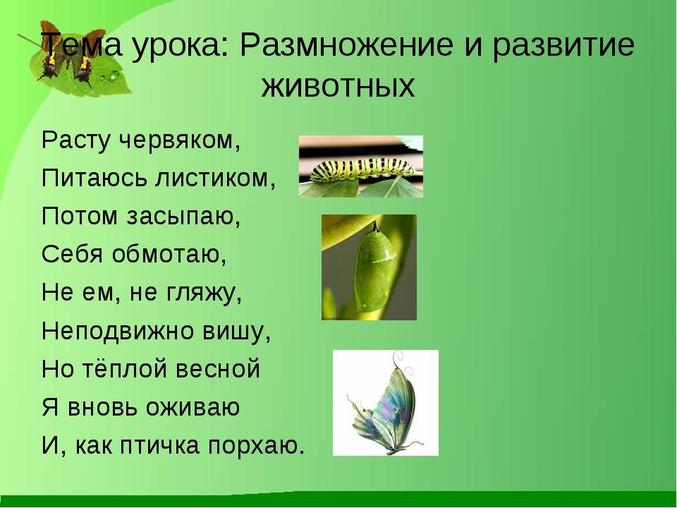 Тема урока: Размножение и развитие животных Расту червяком, Питаюсь листиком,...