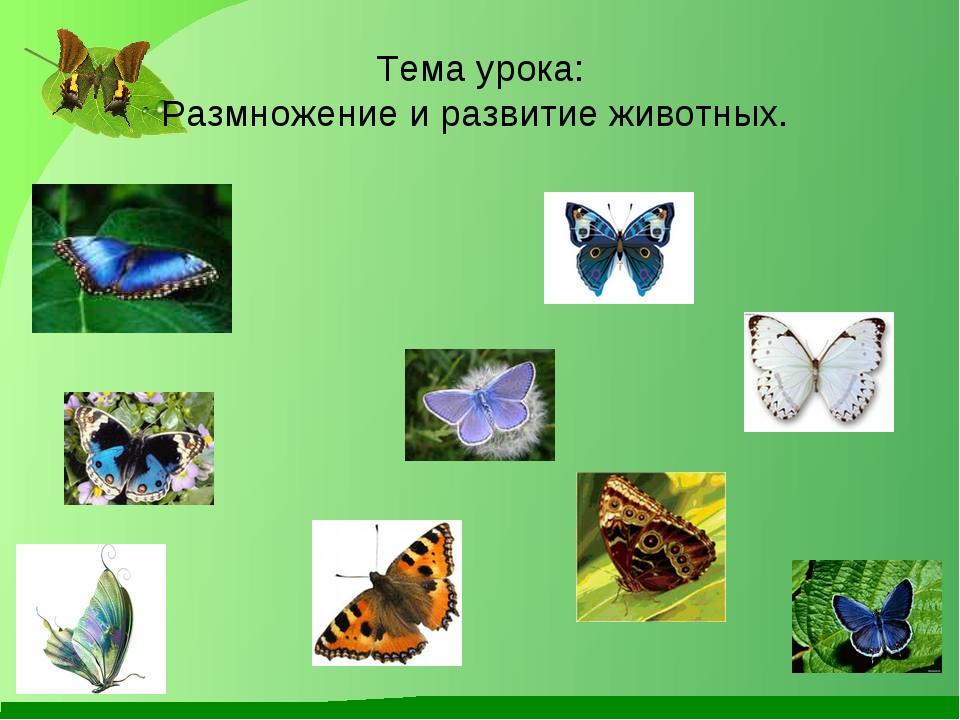 Тема урока: Размножение и развитие животных.