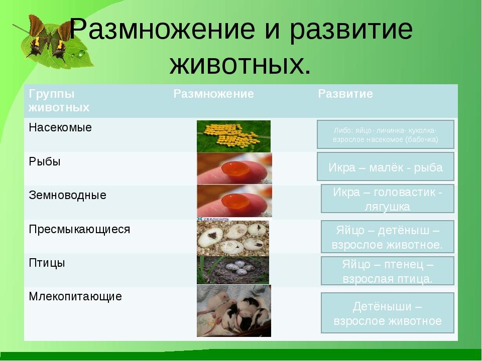 Размножение и развитие животных. Либо: яйцо- личинка- куколка-взрослое насеко...