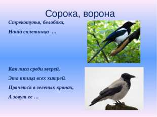 Сорока, ворона Стрекотунья, белобока, Наша сплетница … Как лиса среди зверей,